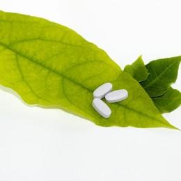 leaf-681122_640