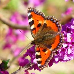 butterfly-43008_640
